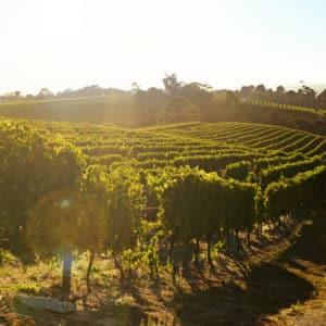 vignes terroir
