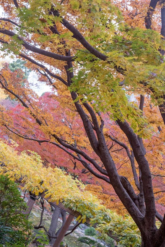 tokyo jardin